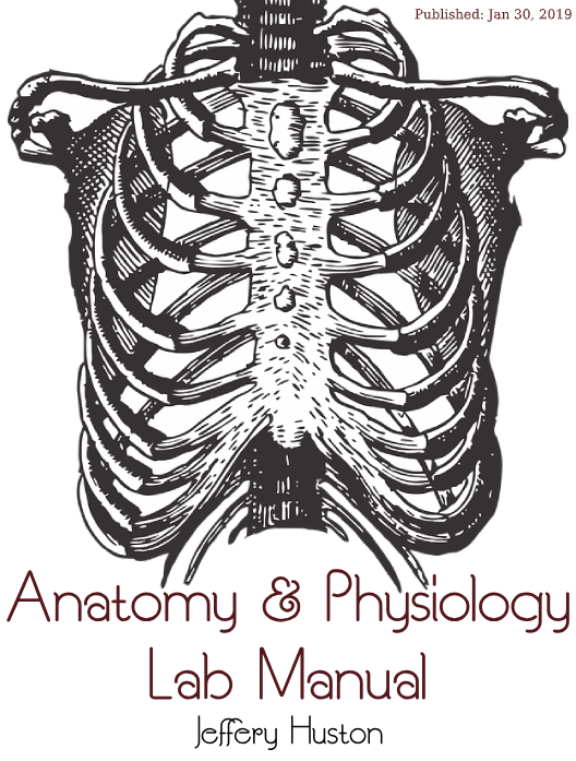 Lab Manual in Human Anatomy 2E: Complete Manual for both Live and Remote Classes