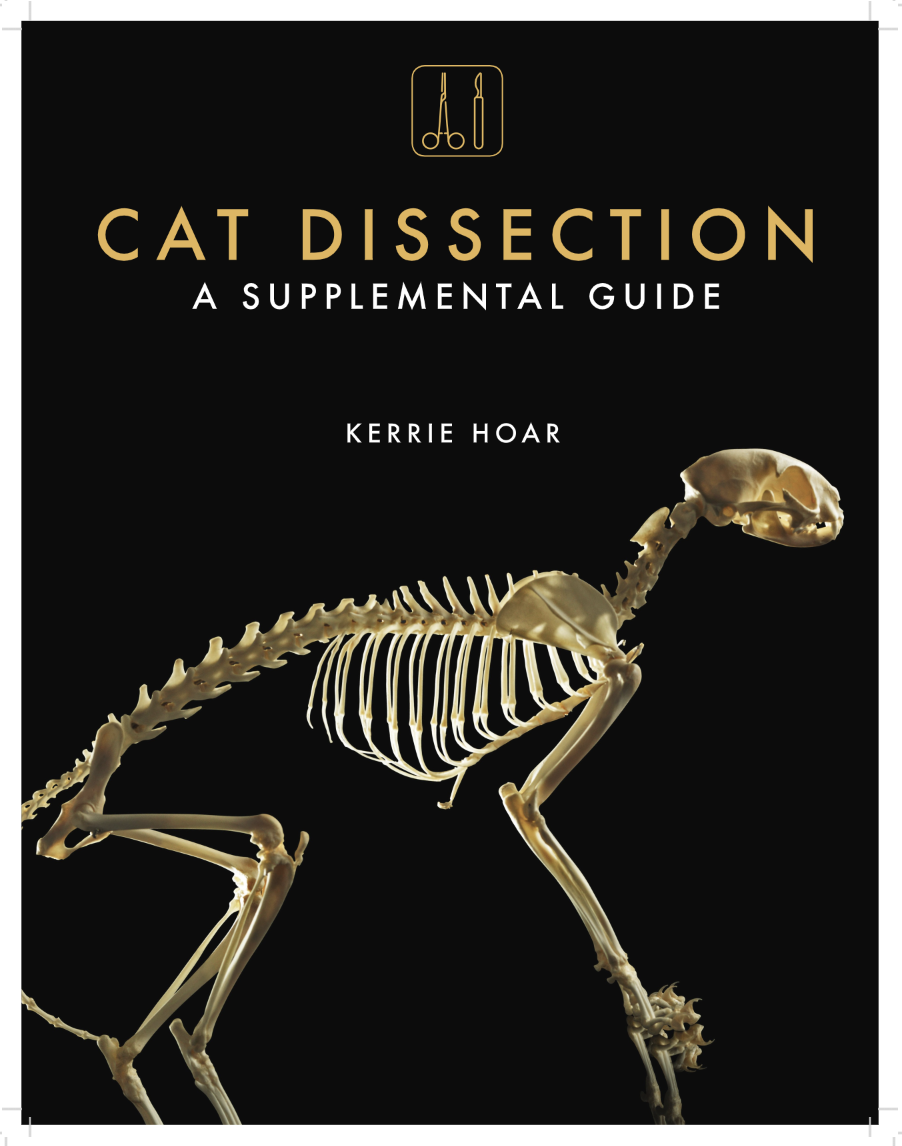 Cat Dissection: A Supplemental Guide